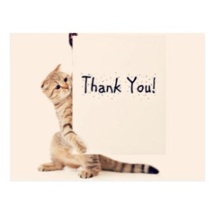 sweet_cat_thank_you_postcard-r869e1aaaa230416fa1d18de904ae04a9_vgbaq_8byvr_324